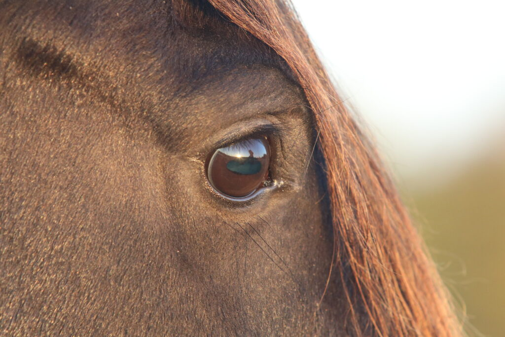 All horses deserve a good life