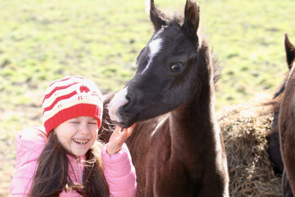 Black Arabian foal